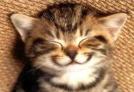 Kitten asleep and smiling